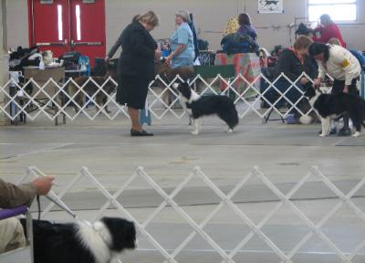 Tracey & TinkerBell of Wilsong Border Collies