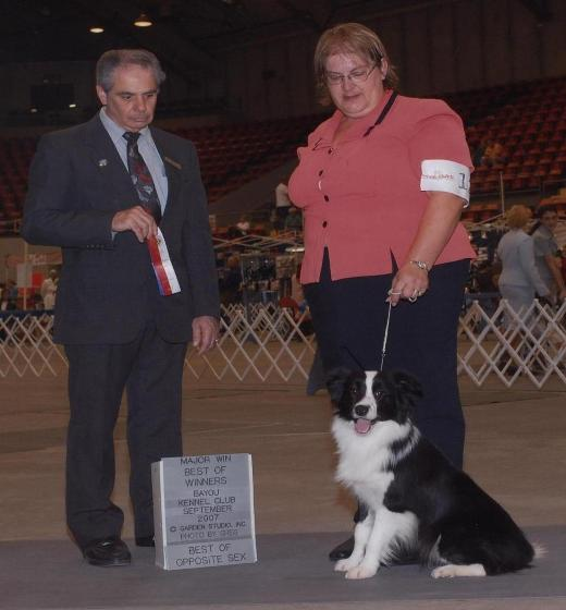 Tracey & Glory of Wilsong Border Collies in Monroe