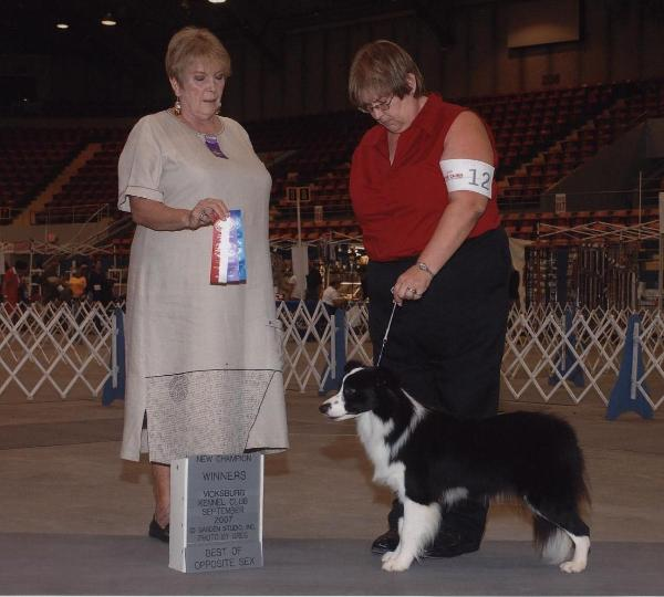 Tracey &  Glory of Wlsong Border Collies in Monroe 2