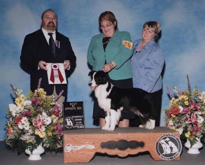 Wilsong Border Collies - GloryBound Best of Opposite KY