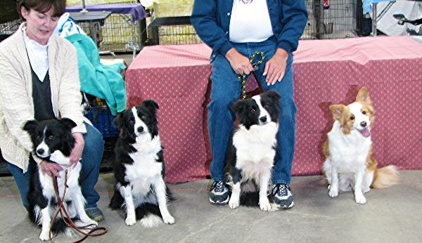 The Gang - Wilsong Border Collies file 21