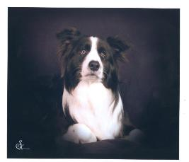 world's most beautiful border collie Shanghai Breezes